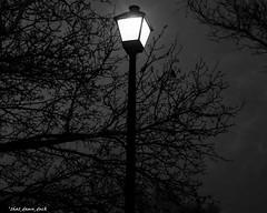 Lamp Post Lighting Up the Night (that_damn_duck) Tags: blackwhite monochrome lamppost lightpole nighttime night bw blackandwhite