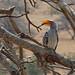 South Africa - Kruger - hornbill