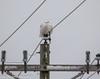Snowy Owl (STLBirder) Tags: carlyle clintonco il