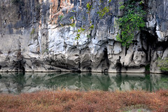 Lijiang river 灕江 烏桕灘 (MelindaChan ^..^) Tags: guilin china 桂林 lijiang river 灕江 烏桕灘 chanmelmel mel melinda life water reflection plant 烏桕 tree tallowtree