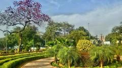 #Beauty_of_Nature #Delhi #INDIA #MicromaxQ392  #www_photography (Hoshiar_Singh_Kalsi) Tags: micromaxq392 delhi wwwphotography india beautyofnature