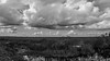 P1011884.jpg (Michael Bartosek) Tags: everglades 2017 michaelbartosekphotography epl3 olympus florida