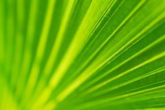 Natural Pattern (Rishabh_Sharma_In) Tags: adobe photoshop lightroom canon 1200d editing skills photo best new year 2018 green nature natural light texture pattern amazing yellow bokeh dof blur lines patterns idea concept india delhi street