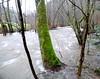 Hochwasser... Wenn aus kleinen Bächen strömende Flüsse werden (Antje_Neufing) Tags: bach pluwig ruwer hochwasser wasser baum rheinlandpfalz natur fluss