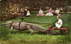 The Joy Ride, California Alligator Farm, Los Angeles, California (SwellMap) Tags: postcard vintage retro pc 30s 40s 50s 60s thirties forties sixties fifties roadside midcentury atomicage nostalgia americana advertising coldwar artdeco linen design style architecture building
