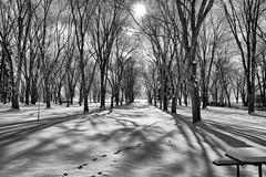 Holiday Beach Conservation Area (Spankysworld.ca) Tags: black white picnic area snow ice shadow shadows sun erca