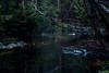 AY6A5590 (fcruse) Tags: cruse crusefoto 2018 vinter canon5dmarkiv natur skog nature forest tyrestanationalpark longexposure stockholm sweden se tyresta