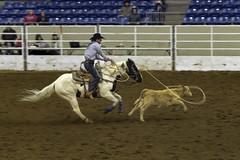 Calf Roping (punahou77) Tags: rodeo calfroping horse calf rope cowboy event nikond500 tamron150600mmlens action sports punahou77 stevejordan