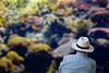 Aquarius... (Renato Pizzutti) Tags: lisbona acquario aquarius spettatore uomo nikond750 renatopizzutti