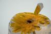 Forbidden Fruit (PhilR1000) Tags: doublevision macromondays apple flower photoshop gerbera applesculpture