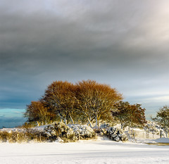 Redheads (Stephen_Lavery) Tags: snow northernireland snowscape trees winter