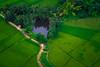 Gorgeous greenery ... (Emu Alim) Tags: countrycity sonyalphaa9 sonybody sonyfe70200mmf28gmoss sonylenses thailand ariel green cultivation village water tank pond