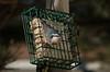 IMGP8606 (CatseyeGomez) Tags: nevada reno bird nuthatch redbreasted