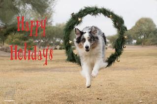 50/52 Happy Holidays