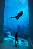 Aquarium cleaning in Atlantis Hotel (Tiziana de Martino) Tags: atlantis dubai emirates acquarium