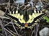 Butterfly 1530 (+1000000 views!) Tags: butterfly borboleta farfalla mariposa papillon schmetterling فراشة