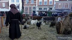 Kerststal met levende haven in Heusden (ditmaliepaard) Tags: kerststal heusden opdefiets a6000 sony kameel drommedaris varken geiten schapen os ezel