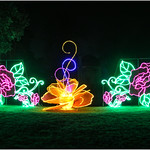 Floral Lights thumbnail