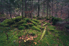 IMG_6651.jpg (Alberto Lacasa) Tags: gree autumn musgo selva canon paraiso huesca rocas pirineos trees eos stone aragon arboles musk forest 1740 5d naturaleza otoño oza pyrenees parquenatural verde