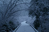 First Snow (Kristian Francke) Tags: path snow outdoors nature trail walkway photography naturephotography weather bc canada pentax cold dusk landscape