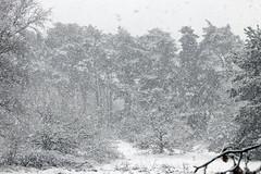 Blizzard (Photography by Martijn Aalbers) Tags: blizzard sneeuwstorm snow sneeuw weather weer autumn herfst fall cold koud trees bomen rosmalen shertogenbosch denbosch brabant noordbrabant thenetherlands nederland dutch nederlands holland 073 white wit canoneos77d ef70200mmf4lisusm wwwgevoeligeplatennl