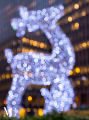 Christmas in New York-2 (matthewcohen93) Tags: bokeh nyc nycphotography nikon nikond7100 night nightphotography newyorkcity ny newyork christmasinnewyork christmasinnyc holidaynewyork holidaysinnewyork holidayshops december december2017 2017 newyork2017 newyorkcity2017 new stores shoppes shops happyholidays lights