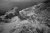 Torrey Pines (F. Neil S.) Tags: california coast surf breakers cliffs canyons wildflowers fullspectrumconversion blackandwhite blancetnoir monochrome hoya r72 filter sony nex6 emount torreypinesstatereserve