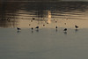 Lungolago, Mantova (pepolino) Tags: inverno winter lago acqua lungolago mantua lake water mantova mincio