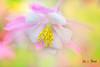 Happiness (Jas Bassi) Tags: love jasbassi jasbassiphotography macrophotography colorfulflower colors nikon nikon105mm nikond800e nikcolorefexpro close up macro macroflower