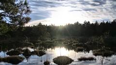 Letzte Sonnenstrahlen im Moor / Last sunbeams in moorland (r.stopable1) Tags: wald moor moorland landscape waterscape eschede lowersaxony niedersachsen cellerland südheide sonnenschein sunshine sky himmel wasser moorsee landschaft natur wolken clouds nature