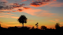 Bradenton Sunset (Jim Mullhaupt) Tags: sunset sundown dusk sun evening endofday sky clouds color red gold orange pink yellow blue tree palm outdoor silhouette weather tropical exotic wallpaper landscape nikon coolpix p900 pond lake water reflection manateecounty bradenton florida jimmullhaupt cloudsstormssunsetssunrises christmas photo flickr geographic picture pictures camera snapshot photography nikoncoolpixp900 nikonp900 coolpixp900