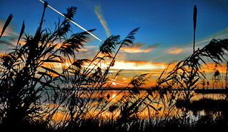 Curtain of reeds and grasses