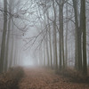 Woodland Fog (hammermad) Tags: forest winter fog foggy mist trees cold