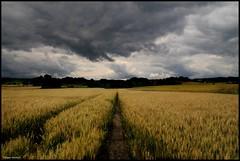 Flée (Sarthe) (gondardphilippe) Tags: flée sarthe maine paysdelaloire champ field paysage landscape campagne loir ciel sky blés arbre tree ngc sundaylights