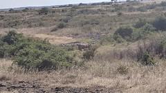 2017-12-28 15.52.01 (dcwpugh) Tags: travel nairobi kenya safari nairobinationalpark