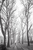 Foggy day (jnicht) Tags: allee berlin berlintreptow instagrammerfromgermany lumixg9 stadtansichten foggyday streetphotography streetphotographyberlin