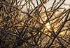 Hedge (The Crewe Chronicler) Tags: twig twigs lowsun sun sunrise hedge frost winter snow fuji fujix20 x20 cheshire