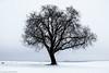 Allein auf weiter Flur (J.Weyerhäuser) Tags: felder schnee hechtsheim landschaft