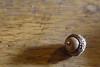 Oak on Oak (Paul Henegan) Tags: 32crop acorn blur desk dust highlights mixedlightsources oak selectivefocus shadows