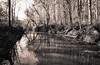 Pokeberry Creek Winter Reflections (cwhitted) Tags: northcarolina unitedstates us bynum chathamcounty pokeberrycreek lowerhawriverstatenaturalarea canoneos6d canon eos sigma sigmaart sigma24105mm sigma24105mmf4dgoshsmart sepia monochrome