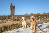 Sun in their eyes (Chris B70D) Tags: scotland explore out about walk winter hike hill view scenery landscape outdoors visit sun weather christmas forrest trees snow green blue 2017 texture raw edit natural light shadow composition photography cairn tower dog golden retriever cute dundee broughty ferry angus east coast views zoom wide angle monument posed framed highlands chris berridge canon 70d home town exploring day off airlie turret stone building viewpoint forfar