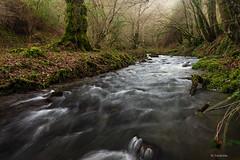 Junto al río (Carpetovetón) Tags: agua arroyo lacubilla sámano castrourdiales cantabria saltoagua cascada nikond610 nikon1835mm españa río regato