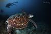 F L Y (Randi Ang) Tags: gili meno gilimeno lombok indonesia giliislands islands island underwater scuba diving dive photography wide angle randi ang canon eos 6d fisheye 15mm randiang
