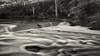 Yarra flow (Pat Charles) Tags: yarra river dightsfalls merricreek melbourne victoria australia blackwhite bw monochrome water motion flow movement stream falls waterfalls waterfall abbotsford cliftonhill nikon tripod longexposure trees 1001nights