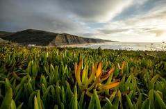 'Destined to Repeat' (Canadapt) Tags: seascape cliffs sunset fog mist vegetation sea horizon seaweed magoito portugal canadapt