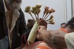 Machmoum (Pablo (JU)) Tags: tunisia jazmin machmoun bouquet tunis