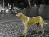 By: Rain Boy (Guilherme Alex) Tags: streetdog square cute cutout bw beatifull animal mycity myworld mylife mutt cellphone