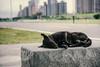 (lin4815) Tags: 浪浪 狗狗 狗 dog stray cold need warmth 發抖 流浪狗 公園 peace 寧靜 渴求