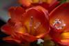 Bunch of Orange (fs999) Tags: 100iso fs999 fschneider aficionados zinzins pentaxist pentaxian pentax k1 pentaxk1 fullframe justpentax flickrlovers ashotadayorso topqualityimage topqualityimageonly artcafe pentaxart corel paintshop paintshoppro 2018ultimate paintshoppro2018ultimate masterphotos fleur flower blume bloem macrolife macro makro