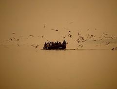 Good karma (M. Carpentier) Tags: gange inde india water boat bateau eau oiseaux birds